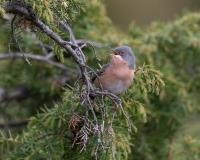 Uccelli - altre specie